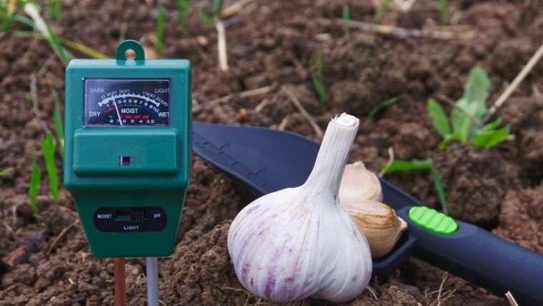土壌のpH測定