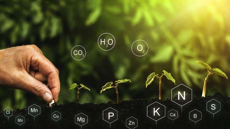 土の養分バランス
