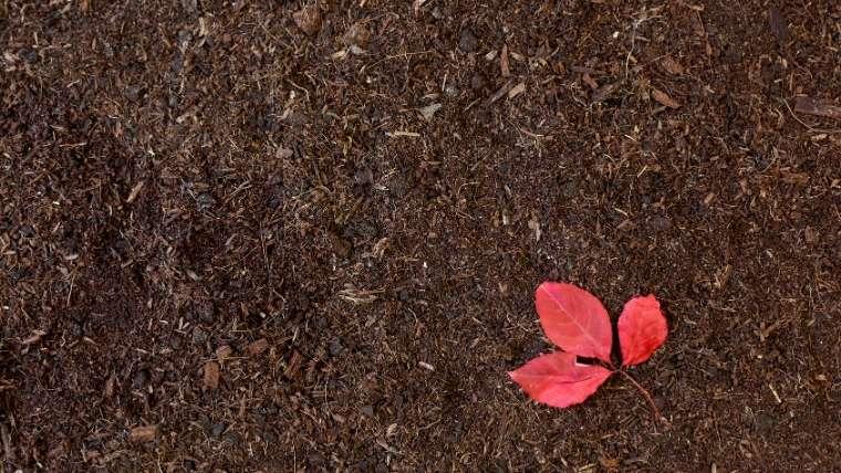 フカフカの土