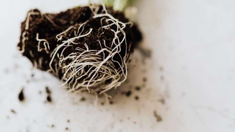 根から吸収