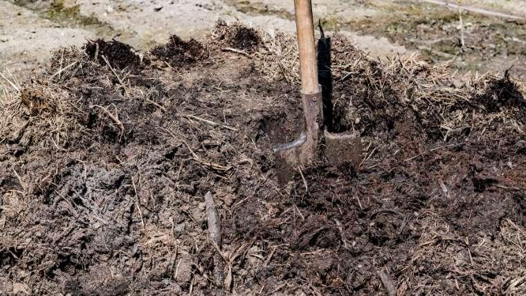 牛フン堆肥