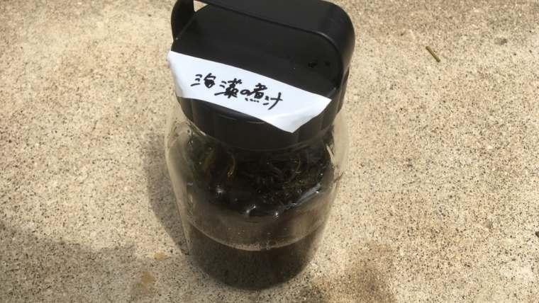 海藻の煮汁