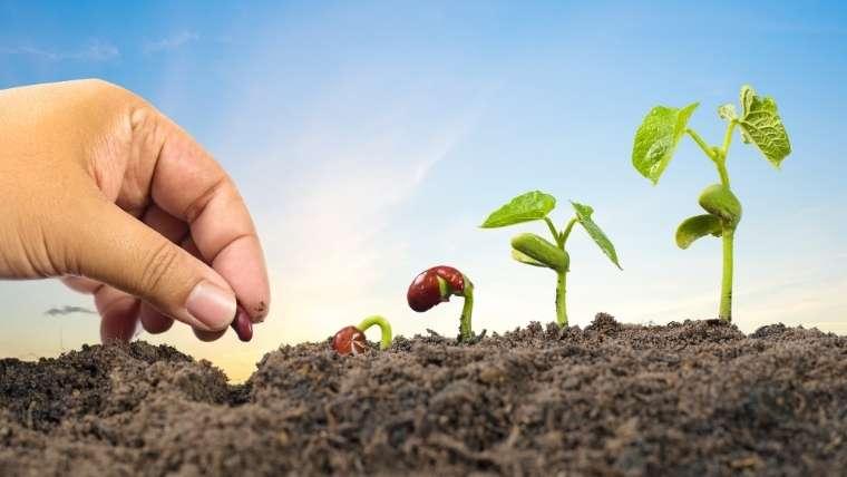 種子の発芽