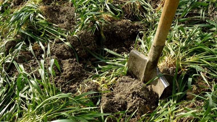緑肥作物をすき込む方法