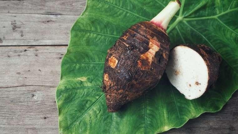 サトイモの品種