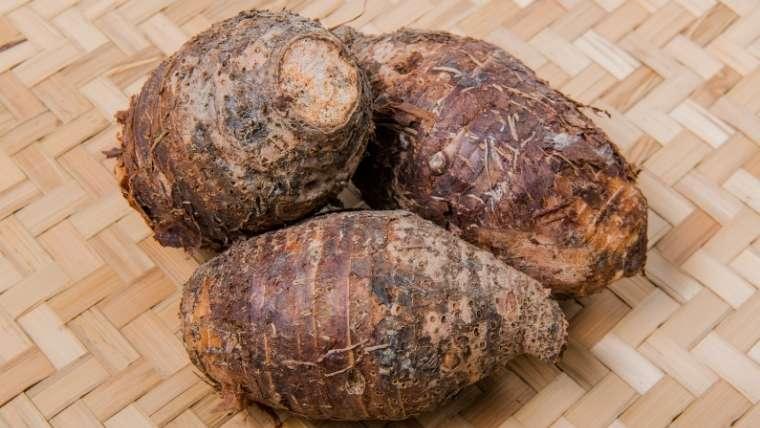 サトイモの種イモ