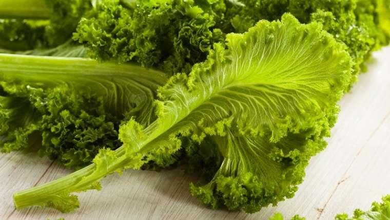 カラシ菜栽培について