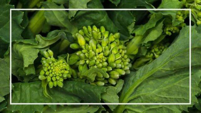 菜花の育て方・栽培方法