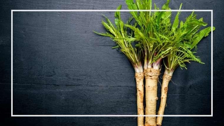 ホースラディッシュの育て方・栽培方法