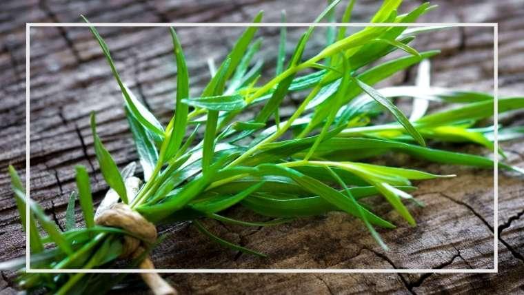 タラゴンの育て方・栽培方法