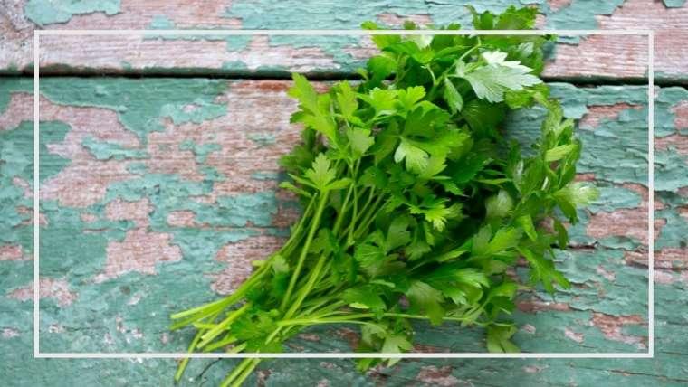 キンサイ(スープセロリ、オランダミツバ)の育て方・栽培方法