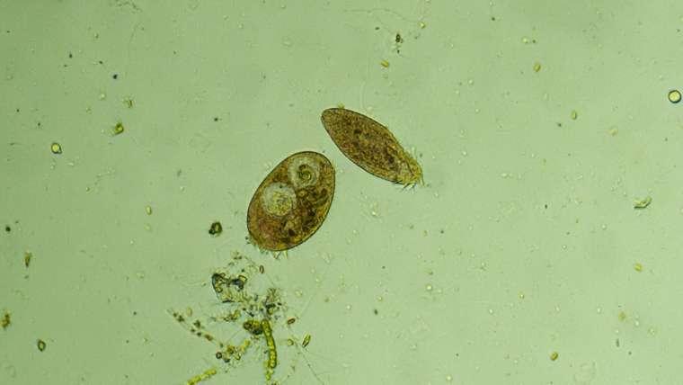 有用微生物