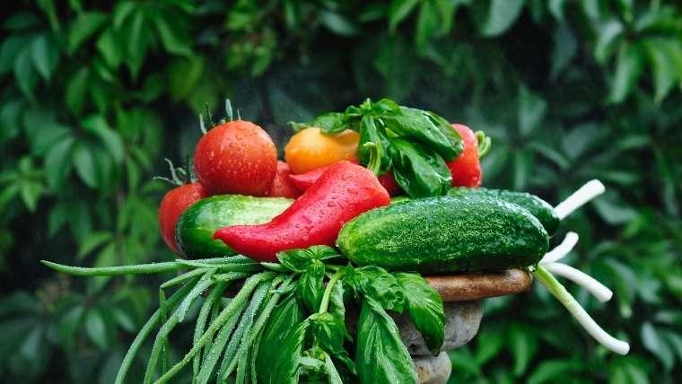 健全な野菜