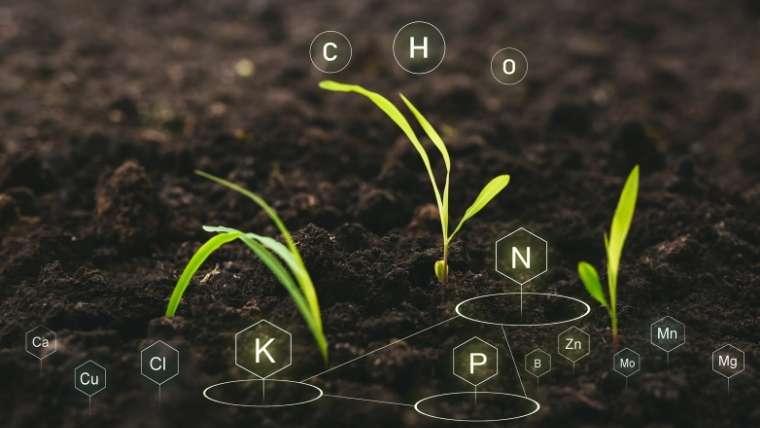 土の栄養分