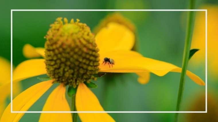 クモ類は益虫!種類と生態