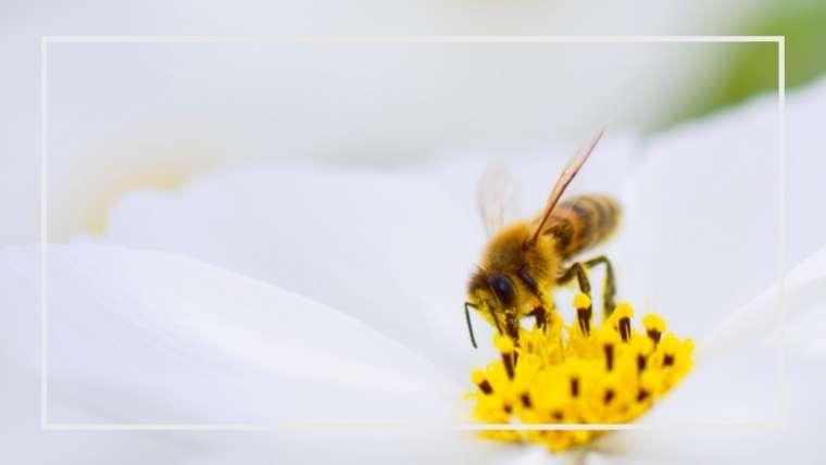 【益虫】ハチ類の種類と生態